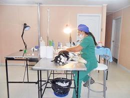 Médicos veterinarios intervinieron 102 mascotas